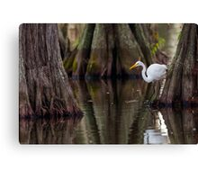 Great Egret Framed by Cypress, Lake Martin, Breaux Bridge, Louisiana Canvas Print