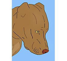 Cute and Sad Red Nose Pit Bull Portrait - Line Art Photographic Print