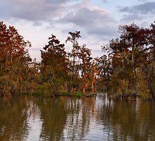 Swamp at Sunrise, Lake Martin, Breaux Bridge, Louisiana by Paul Wolf