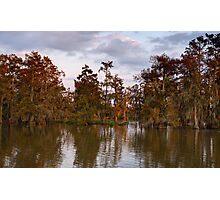 Swamp at Sunrise, Lake Martin, Breaux Bridge, Louisiana Photographic Print