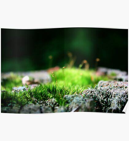 Moss Wonderland Poster