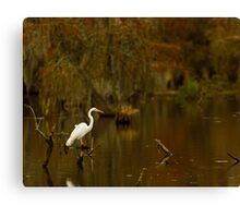 Great Egret on Lake Martin, Breaux Bridge, Louisiana Canvas Print