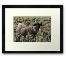 THIS MUST BE THE BLACK SHEEP OF THE FAMILY Framed Print