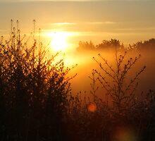 Low Sunrise by Kathi Huff