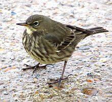 Small Beach Bird On Pavement  by EvieTuffs