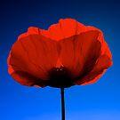 Poppy Love by fernblacker