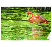 The Pink Flamingo Poster