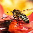 Shoo Bee Do! by Kenneth Haley