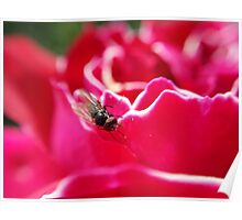 ugly fly on a beautiful flower Poster