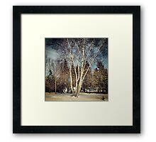 Birch Tree in Winter Original Framed Print