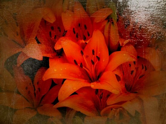 Antique lilies by missmoneypenny