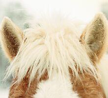 Haflinger Horse Ears by jamieleigh