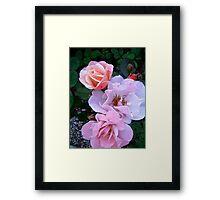 Governor General's Roses13 Framed Print