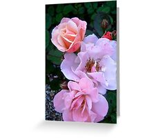 Governor General's Roses13 Greeting Card