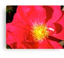 Governor General's Roses14 Canvas Print