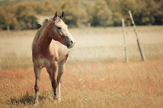 Appaloosa Horse by jamieleigh