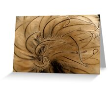 Clematis seed head Greeting Card