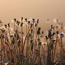Early Morning Dandelions by Kathi Arnell