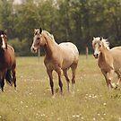 Three Horses Trotting by jamieleigh