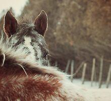 Appaloosa Horse Hiding by jamieleigh