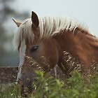 Haflinger Horse Head by jamieleigh