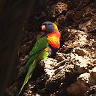 Rainbow Lorikeet by Samsticks
