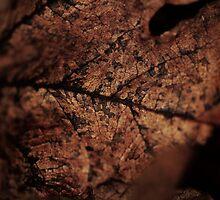 Leatherleaf by Samsticks