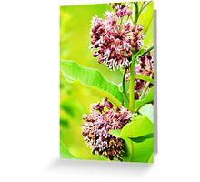 Tiny Flowers I  Greeting Card