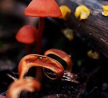 Mushrooms by Samsticks