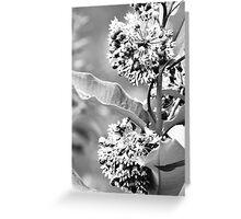 Tiny Flowers II  Greeting Card