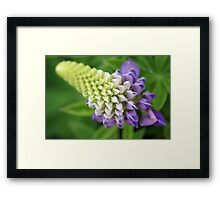 A study in depth of field Framed Print