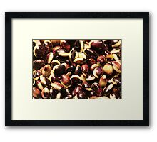Purple Hycinth Beans Framed Print
