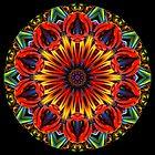 Colour Explosion by fantasytripp