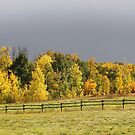 Fall Road by Kathi Arnell