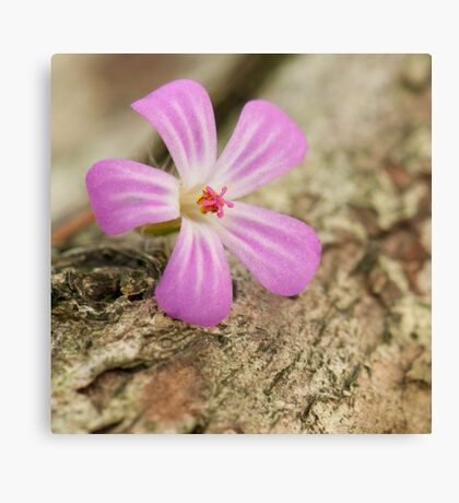 Herb Robert in the woods against bark of a tree Canvas Print