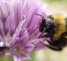 bumblebee on a chive flower by Inse van Houts