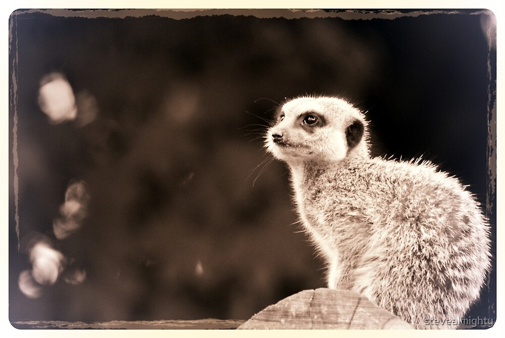 Retro Meerkat by stevealmighty