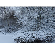 beautiful snow scene Photographic Print