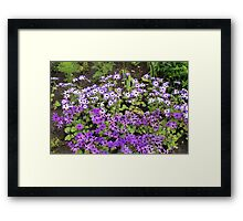 favourite flowers Framed Print
