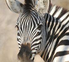 Plains Zebra by Nick Hart