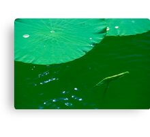 lotus pond in early summer Canvas Print