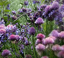 Purple Herbs by naturelover