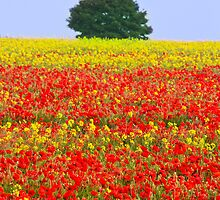 Primary Colours of Summer by vivsworld