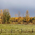 Fall by Kathi Arnell