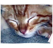 Ginger Sleeps Poster