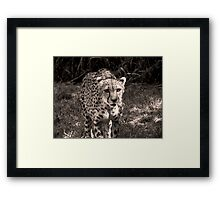 grayscale stray Framed Print