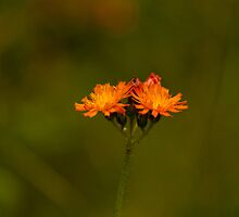 Orange Delight by GailDouglas