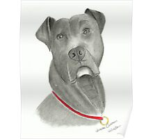 American Bulldog - Pencil Portrait Poster