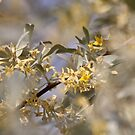Olive Willow by Kathi Arnell
