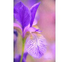 Iris in Pastel Photographic Print